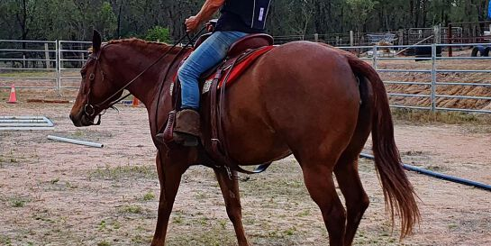 Relaxed, Practice Day, Cowboy Dressage,  Ground Skills & more.