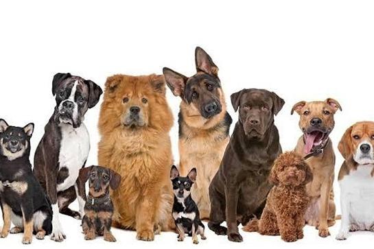Canine Interventions Handlers Course MURWILLUMBAH