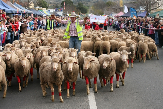 Rosto Merriwa Festival of the Fleeces