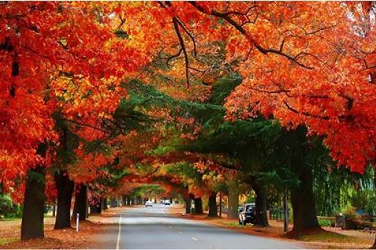 Bright Autumn Festival - Vietnamese Carers Day