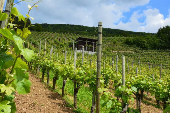 Webinar - Financial Survival during COVID-19: Federal and State Grants for the Wine Sector