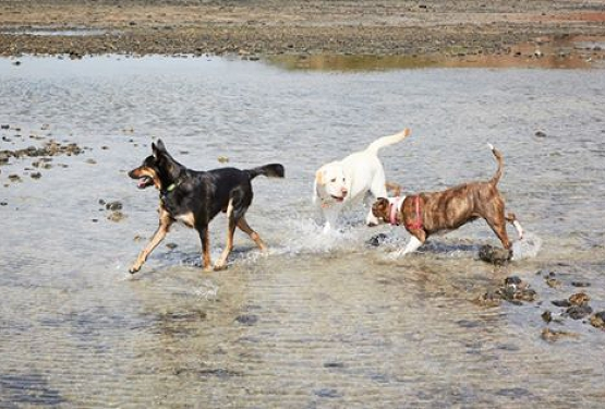 Canine Communication Workshop Session