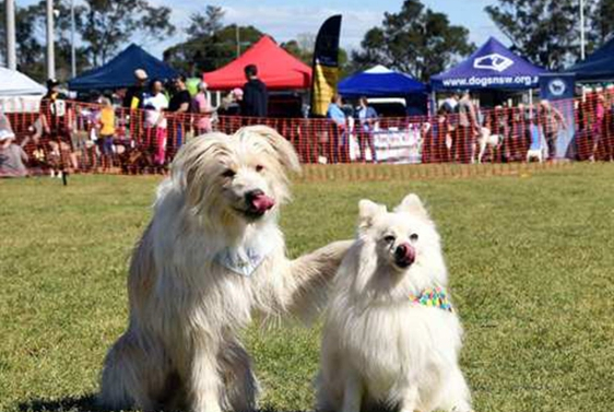 Blacktown Pet Festival