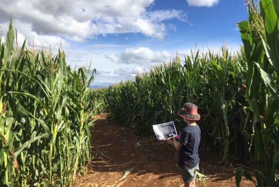 Rupertswood Farm Crop Maze